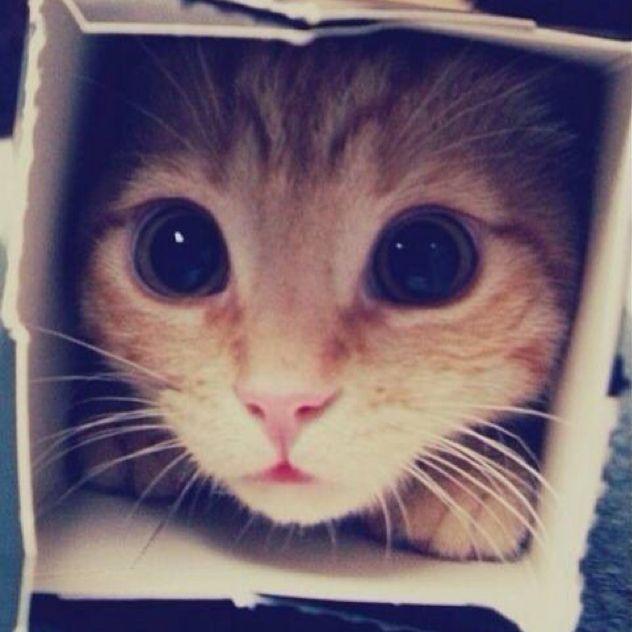 超萌的喵星人头像; ; 可爱猫猫qq头像