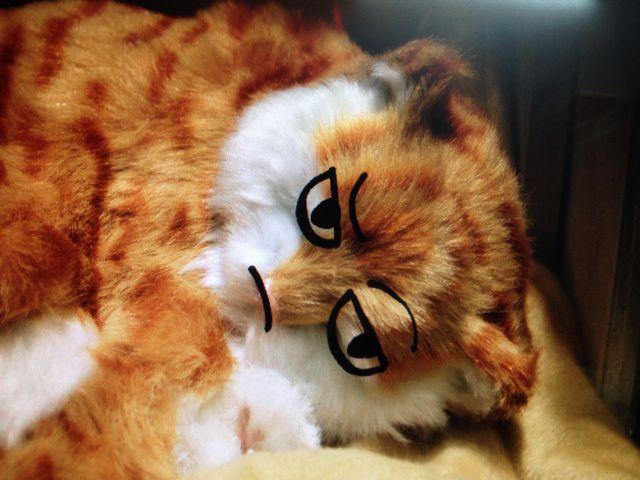 壁纸 动物 狗 狗狗 猫 猫咪 小猫 桌面 640_480