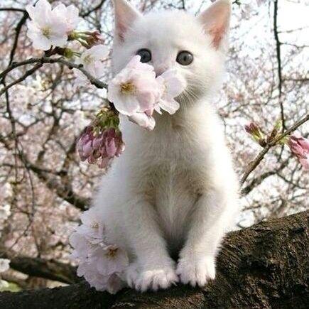 无水印高清猫咪可爱头像