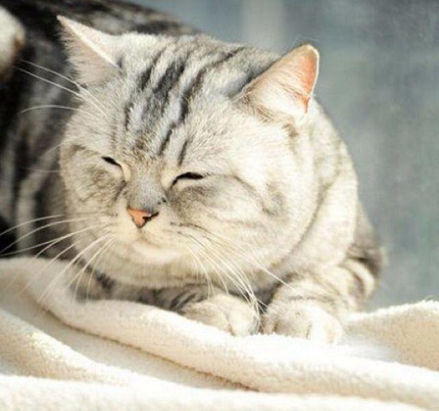 圆眼睛可爱猫咪 图片