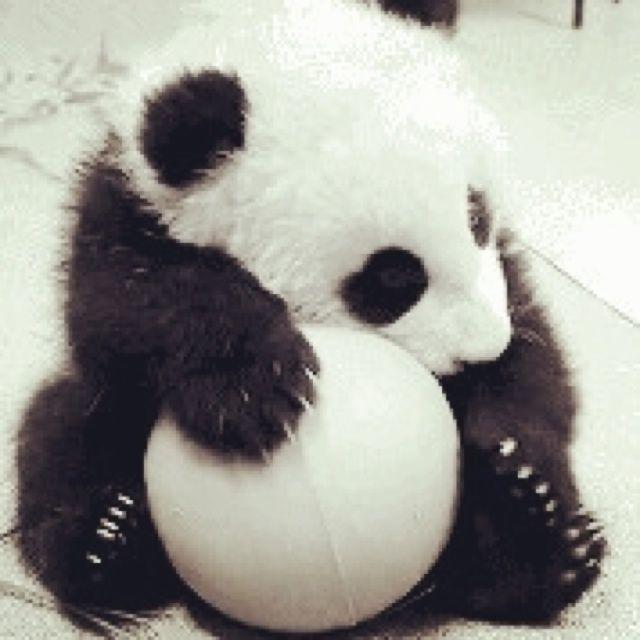 天才小熊猫头像高清图片