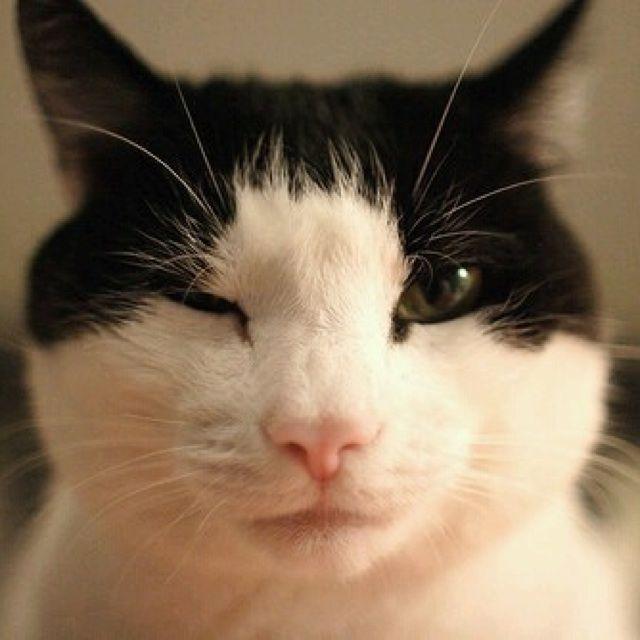 画画小猫图片大全可爱男生的吧!