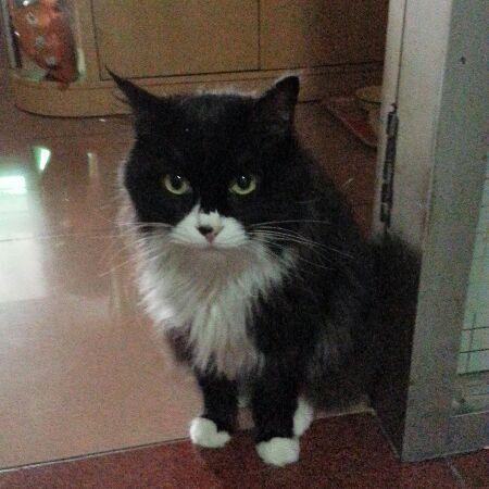 壁纸 动物 猫 猫咪 小猫 桌面 450_450