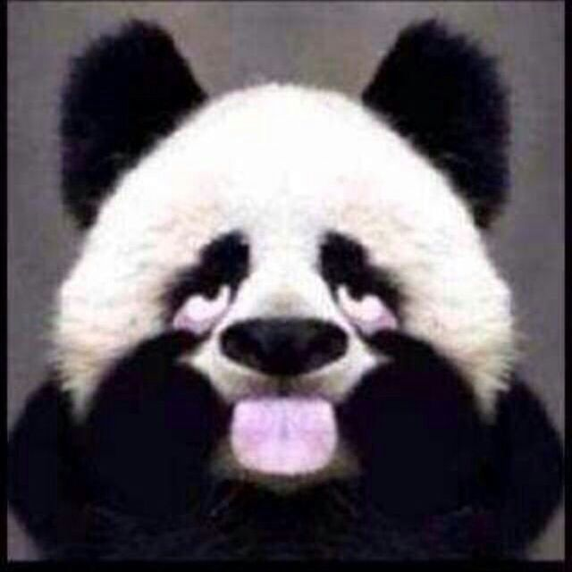 - 天才小熊猫