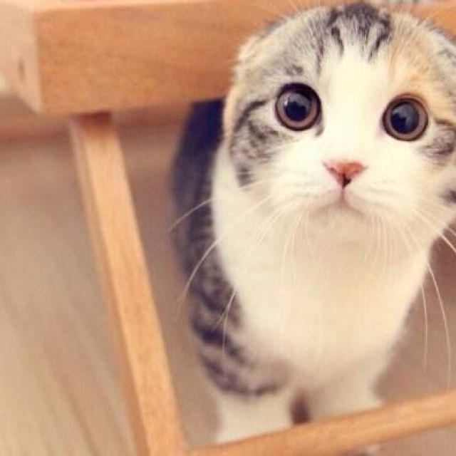小猫爱情简笔画