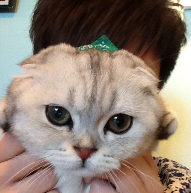 失眠小猫图片可爱