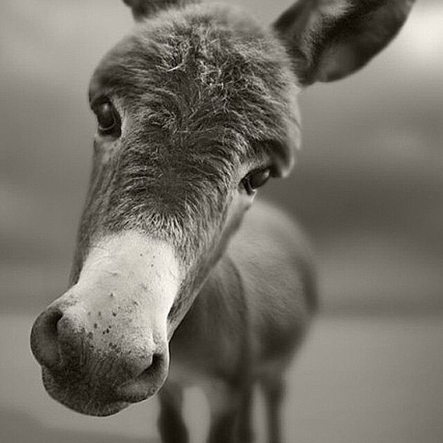 动物烦躁的图片