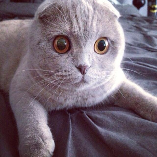 傲娇猫咪简笔画
