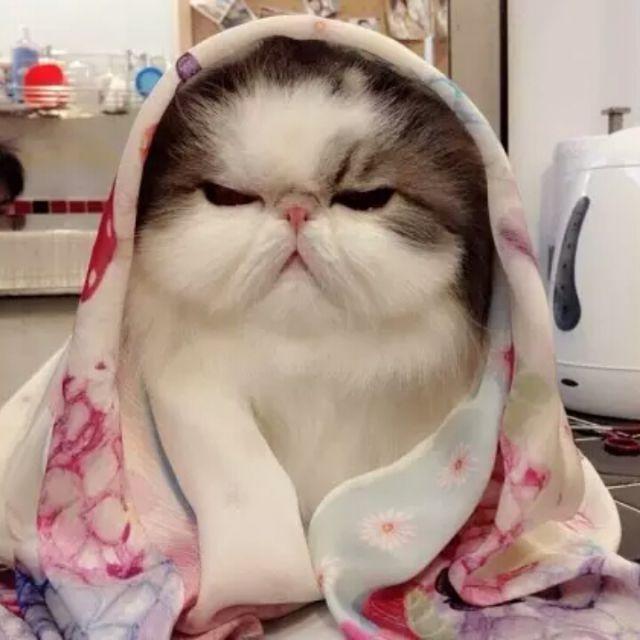 漂亮时尚可爱喵咪图片