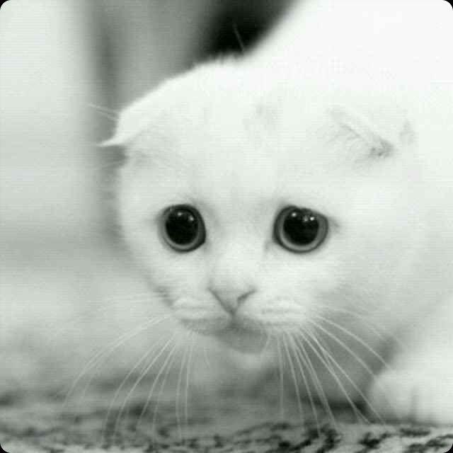 可爱萌猫咪头像 卖萌的小猫咪; 猫咪; 9个收集|1人喜欢