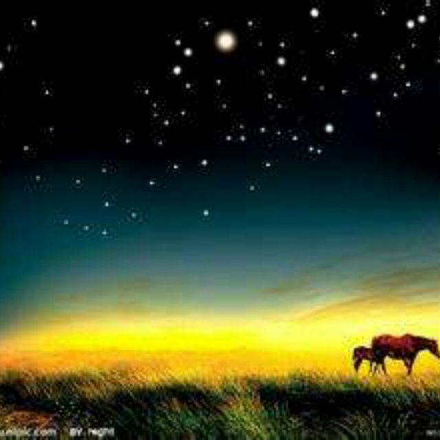 草原的夜色_草原夜色美