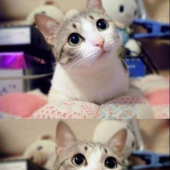 壁纸 动物 狗 狗狗 猫 猫咪 小猫 桌面 580_580