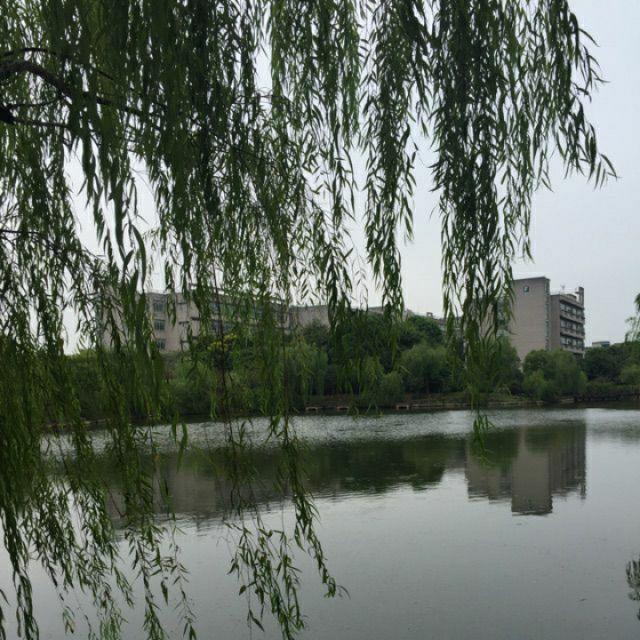 壁纸 垂柳 风景 柳树 摄影 树 桌面 640_640