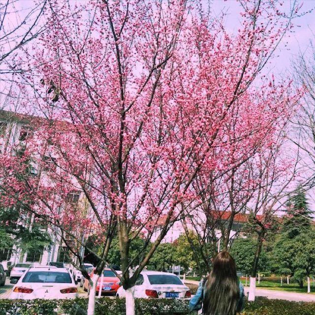 咬春【赵雷】