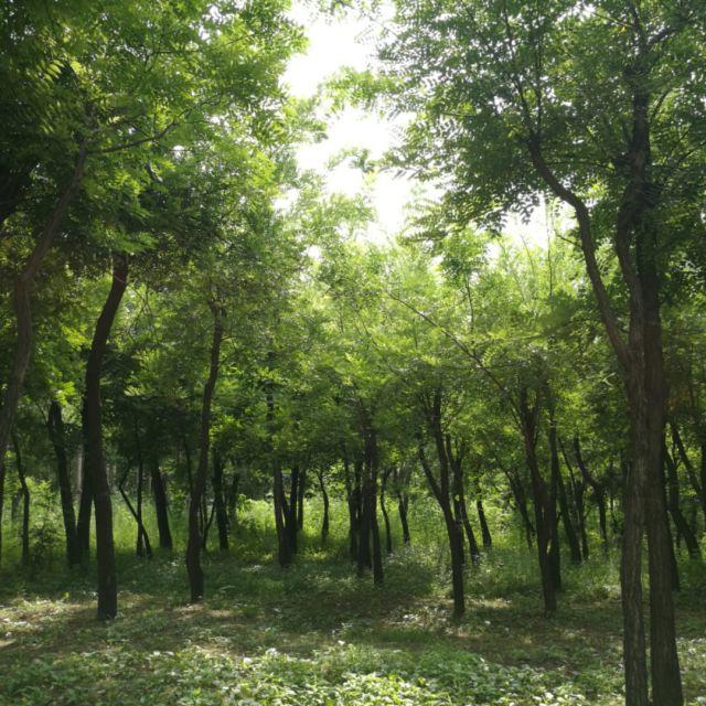 大森林的早晨