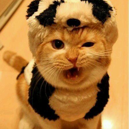 威猛的小老虎-旺财的作品